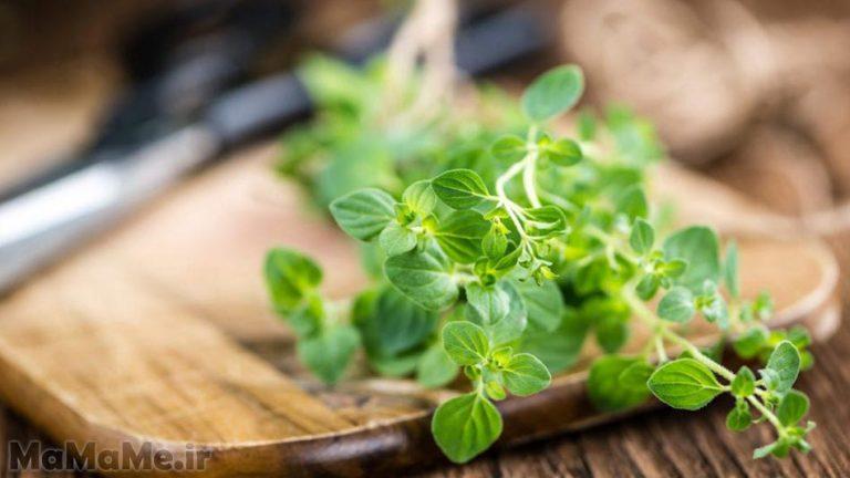 گیاه-دارویی-مرزنجوش